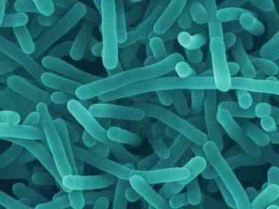 Mikroskopický snímek bakterie listeria monocytogenes